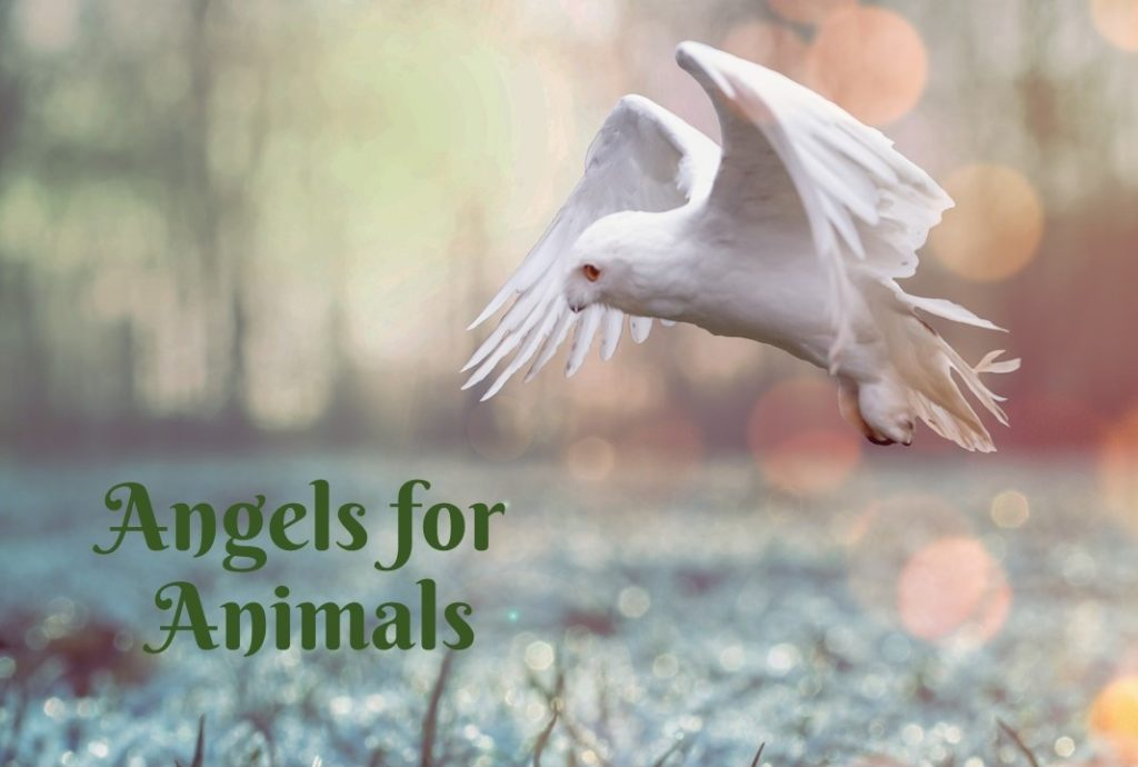 Angels for Animals 1024x690